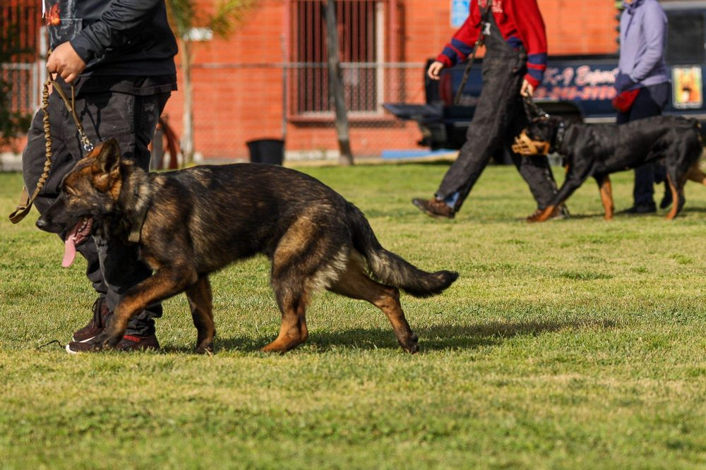 Wolfgang Expert Dog Training: 360 W Rosecrans Ave, Gardena, CA