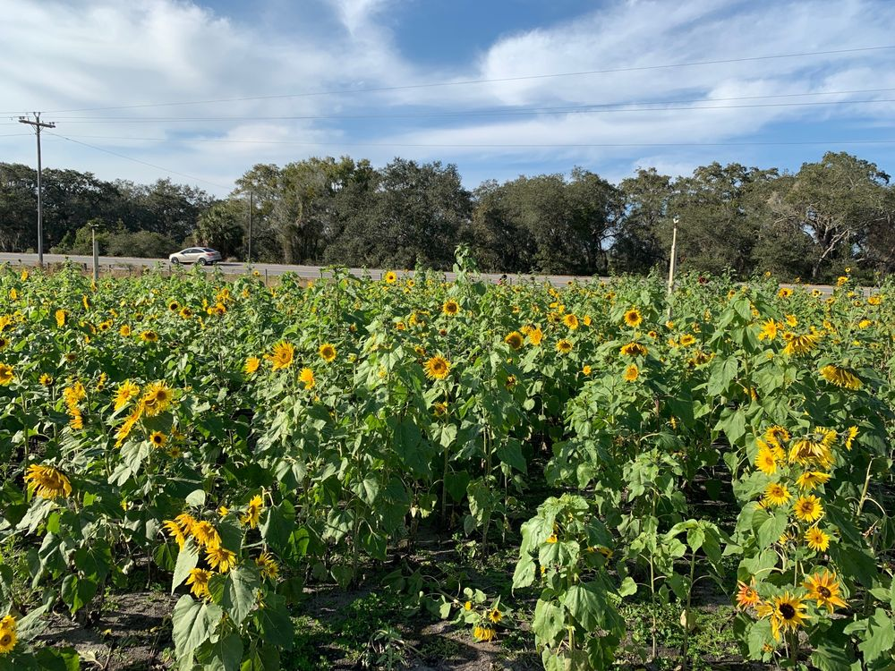 Stanley Pond Adventure Farm: 15426 County Road, Astatula, FL