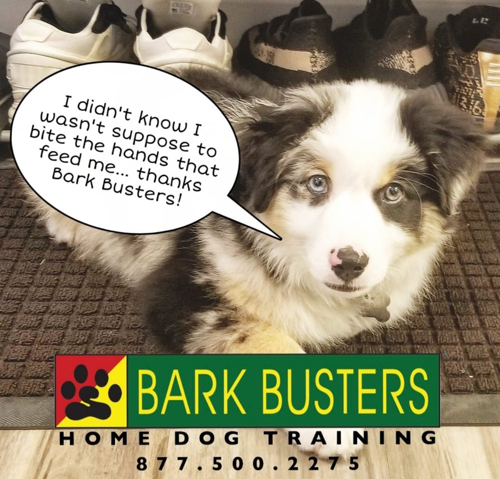 Bark Busters in Home Dog Training: Gambrills, MD