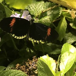 Photo Of The Smithsonian Butterfly Habitat Garden   Washington, DC, United  States ...