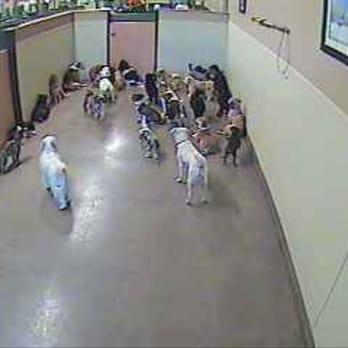 Bow Wow Dog Kennel Tucson