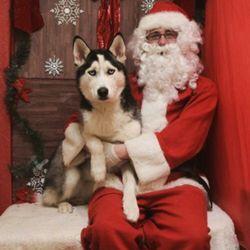 Rhode Island Husky Yorkie Puppies Pet Services 54 Homer St