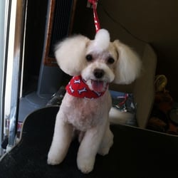 Pawz r us dog grooming salon 25 photos 12 reviews pet groomers photo of pawz r us dog grooming salon chula vista ca united states solutioingenieria Gallery