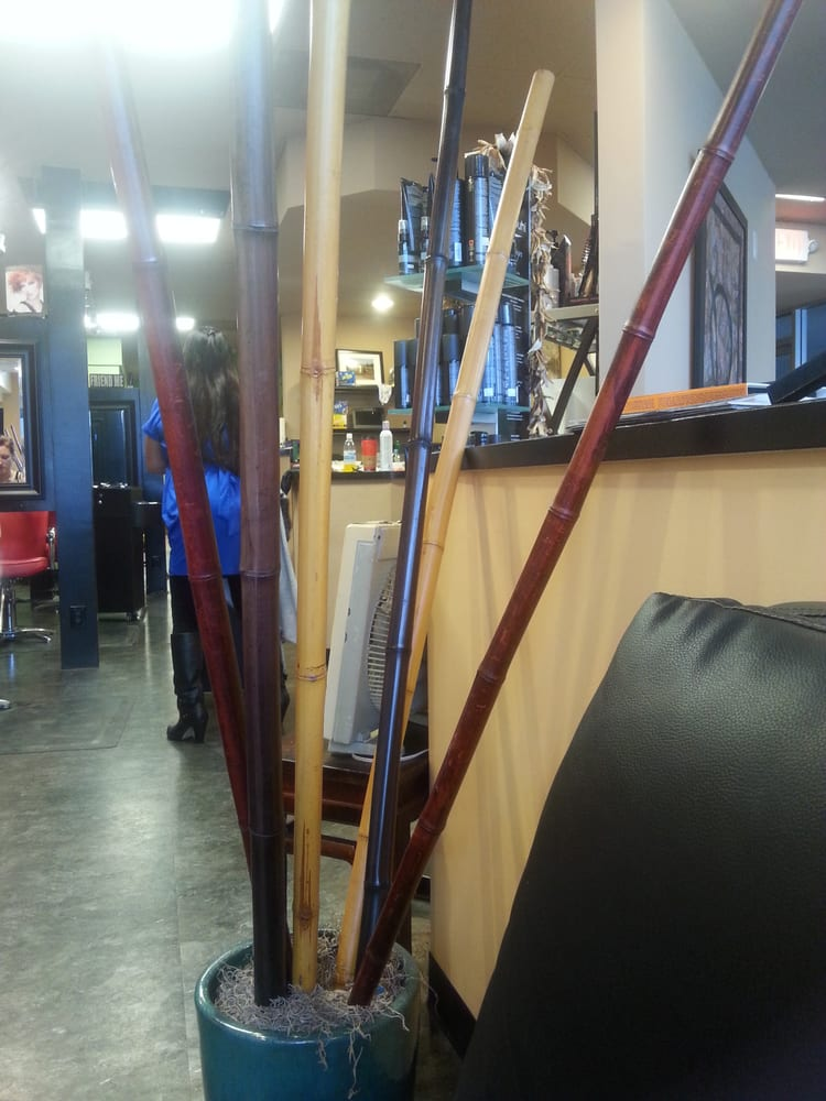 Great atmosphere yelp - Focos salon ...