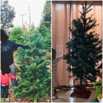 Photo of Patchen California Christmas Tree Farms - Los Gatos, CA, United  States - Patchen California Christmas Tree Farms - 45 Photos & 39 Reviews