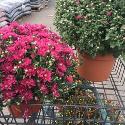 Fairless hills garden center