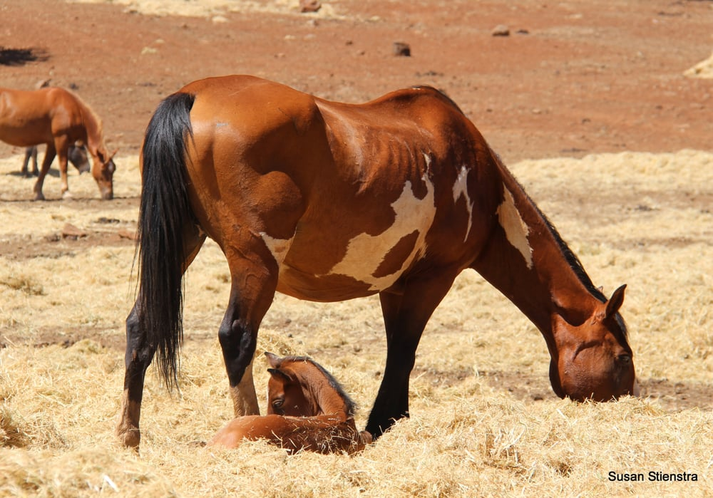 The Wild Horse Sanctuary: 5796 Wilson Hill Rd, Shingletown, CA