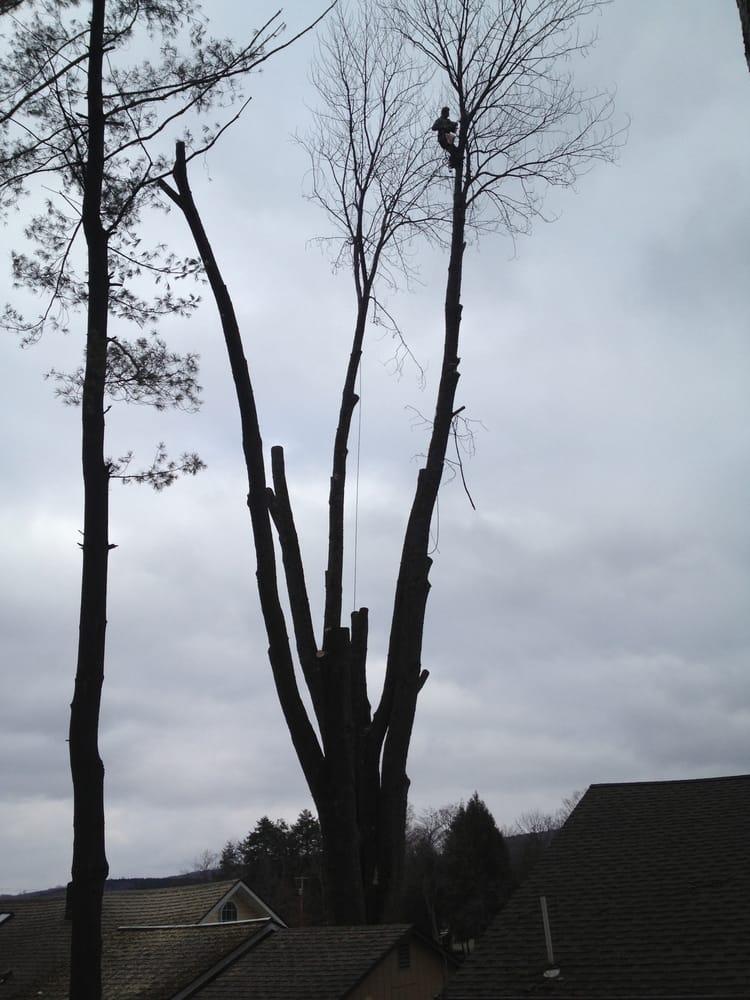 Benedict Tree & Stump Removal: Cazenovia, NY