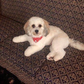 Rose Glen North Dakota ⁓ Try These Pomeranian Puppies For