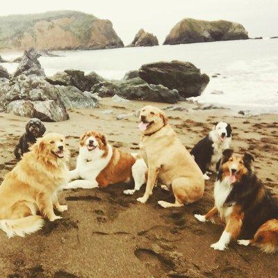 Canine care inc denver