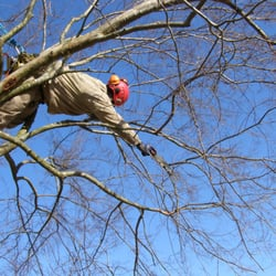 Photo Of Highpoint Tree Care The Woodlands Tx United States