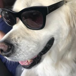 The Best 10 Pet Boarding In Austin Tx Last Updated December 2018