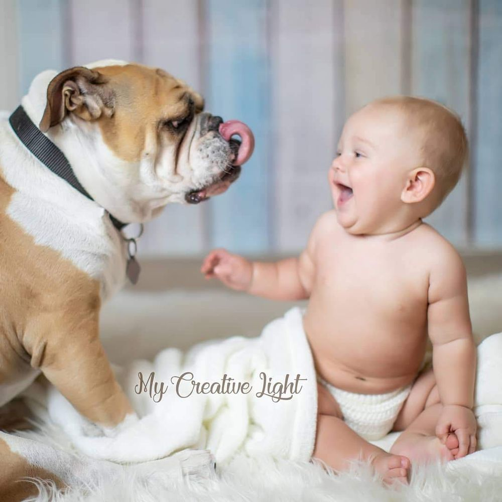 Just Like Home Pet Sitting Services: Chandler, AZ