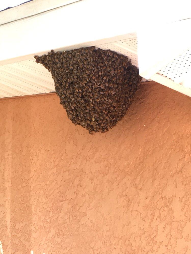 Beekeeper Steve: Lehigh Acres, FL