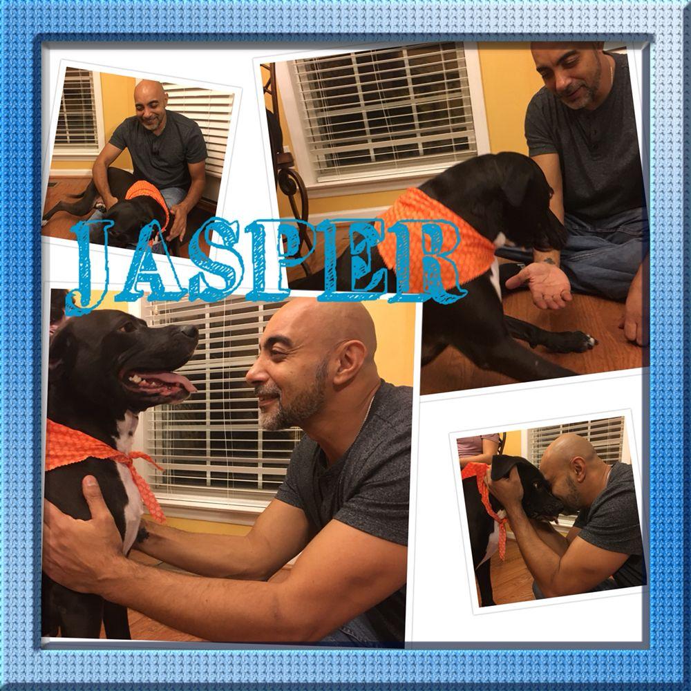 WallyWood Pet Spa: Apex, NC