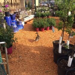 Earl may nursery garden center ankeny nurseries gardening 1509 n ankeny blvd ankeny for Earl may nursery garden center