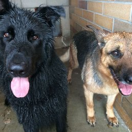 Dog Training Parkland County