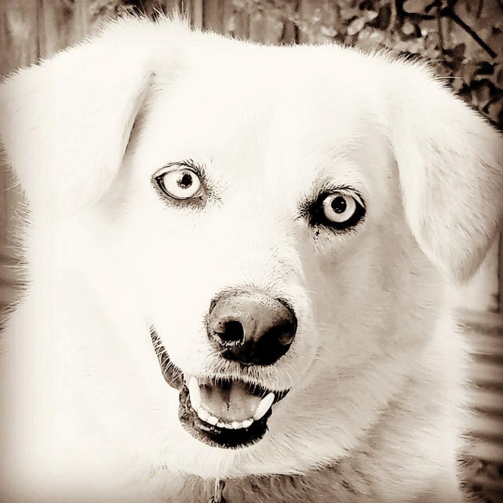 KYPSAH Pet Services: Woodland, CA