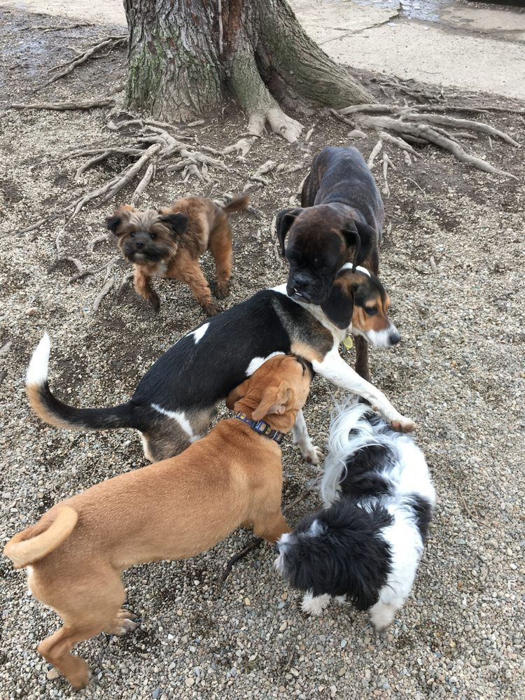 Happy Dog Pet Resort: 398 Ashland St, Abington, MA