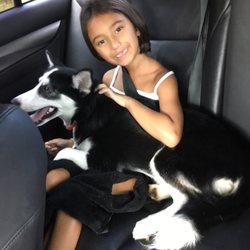 Florida Puppies Online - 39 Photos & 10 Reviews - Pet