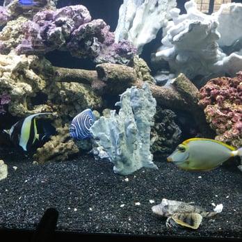 Photo Of The Ocean Floor   Phoenix, AZ, United States. 210 Gallon Tank