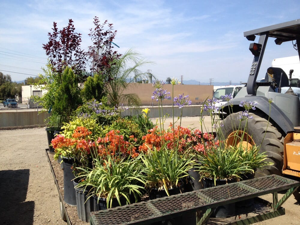 Photo of Starline Nursery Company: La Puente, CA