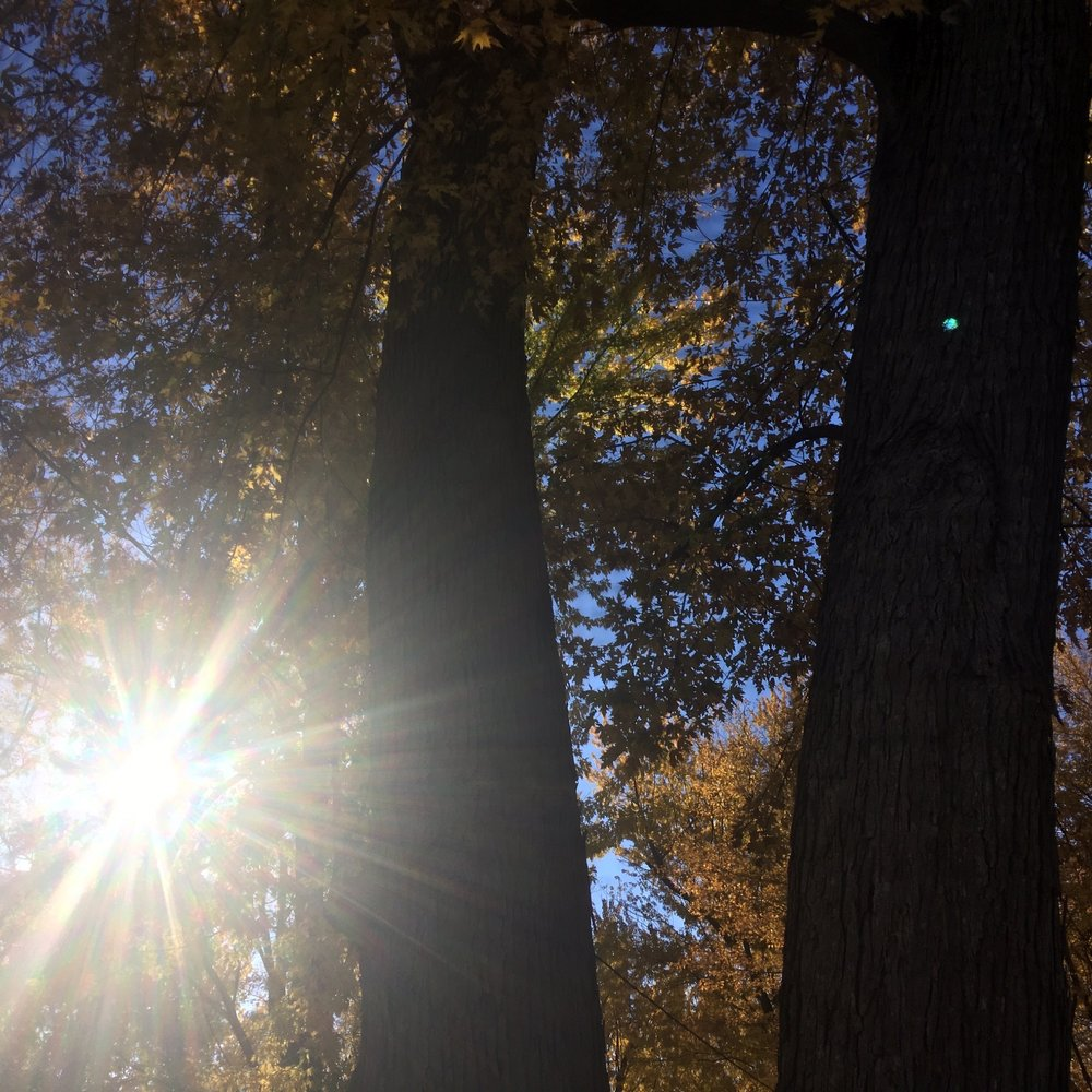 River Terrace Park: 1335 River St W, Monticello, MN