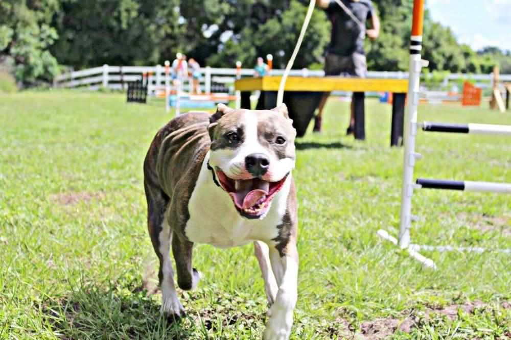 Natural Instinct Dog Training: 8073 Stone Rd, Apopka, FL