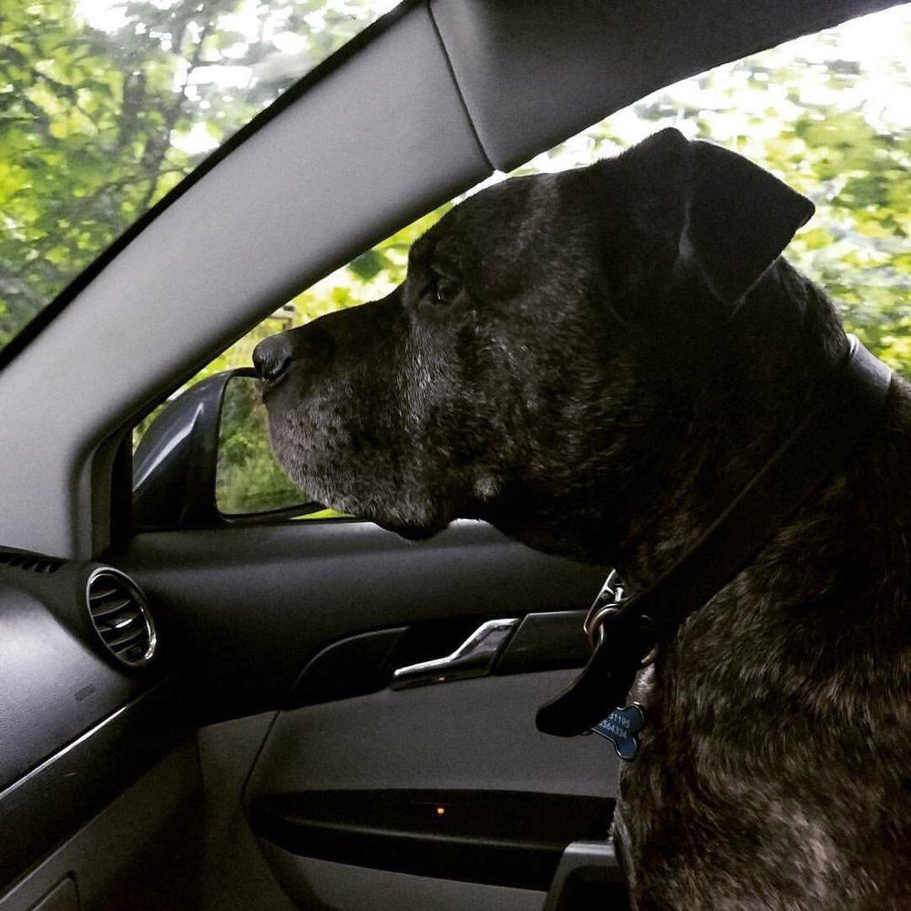 Sit 'N Stay Pet Sitting: Burien, WA