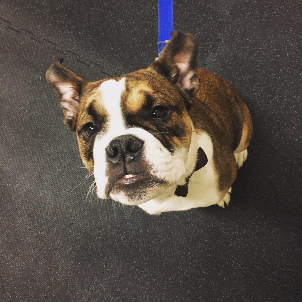 Dog Training Near Huntersville Nc