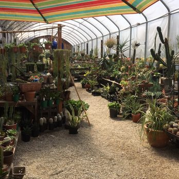 Photo Of Bolles Nursery Landscape Bakersfield Ca United States Succulent And Cactus