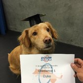 Zoom Room Dog Training - 87 Photos & 71 Reviews - Pet Training ...