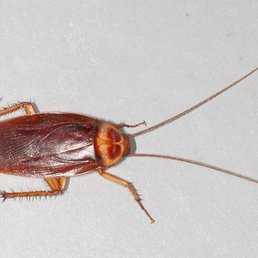 Bed Bugs Pest Control 24 Photos Pest Control 3 Greenway St