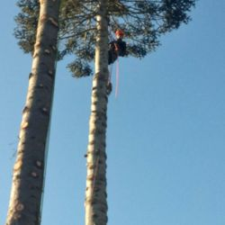 Photo Of Bellingham Tree Tech And Care Wa United States Limbing
