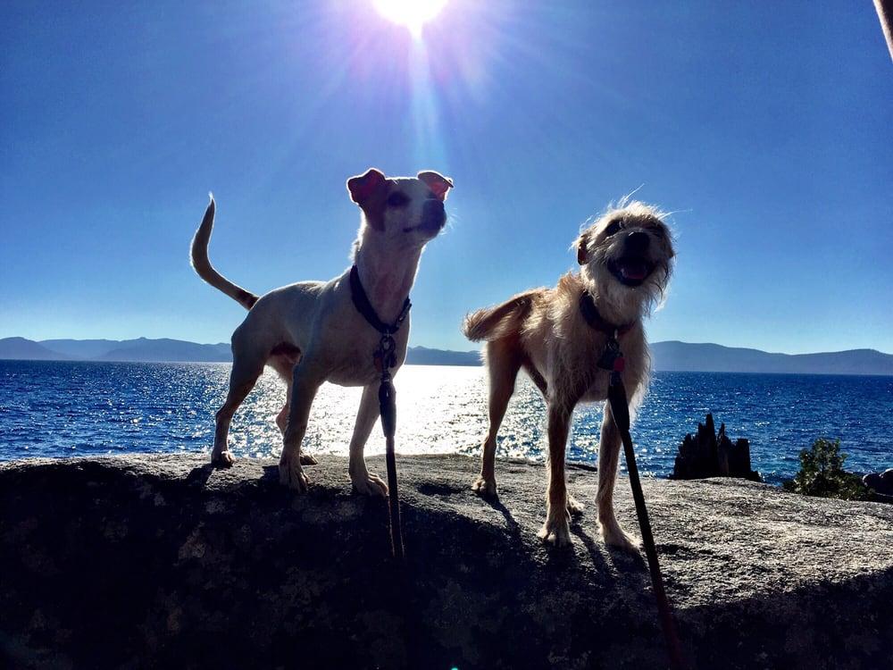 Hot Diggity Dog and Cat: 8675 N Lake Blvd, Kings Beach, CA
