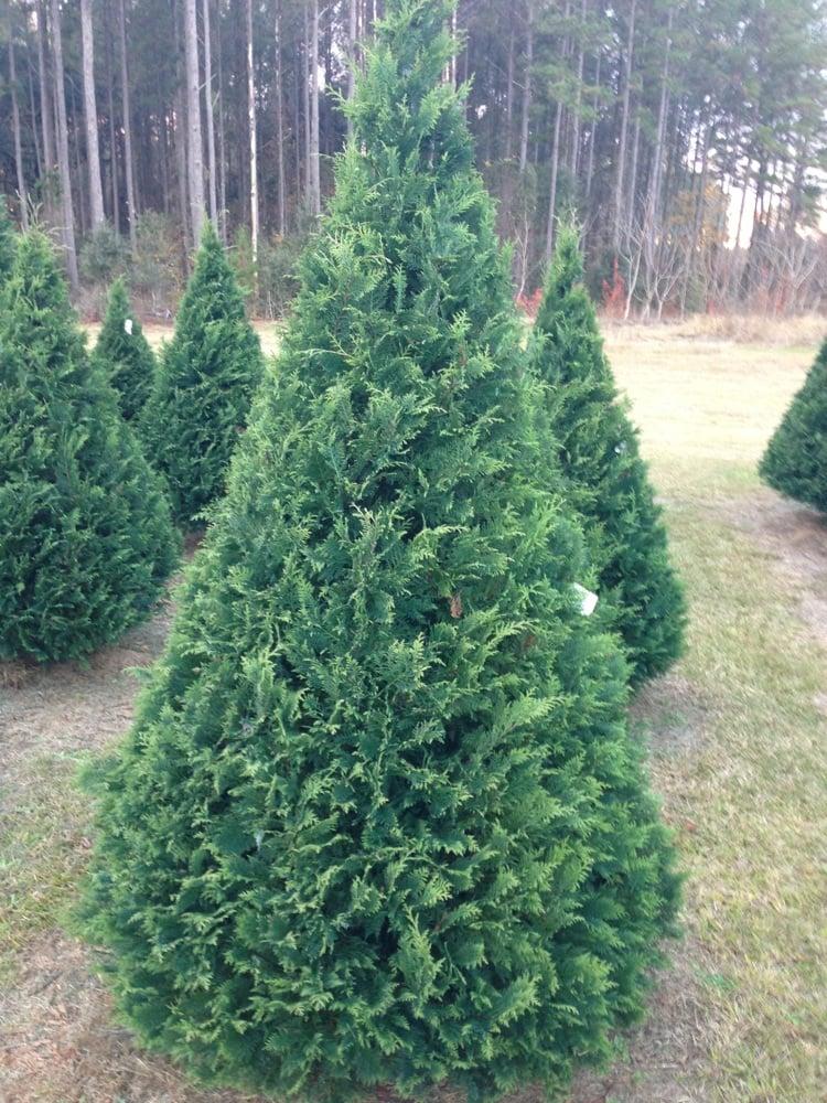 Brewer Christmas Tree Farm - Christmas Trees - 1067 Robert Hill Rd ...