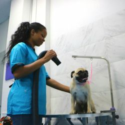 Jazzy pawz by andrea 131 photos 51 reviews pet groomers 245 jazzy pawz by andrea 131 photos 51 reviews pet groomers 245 n highland ave ne inman park atlanta ga phone number yelp solutioingenieria Image collections
