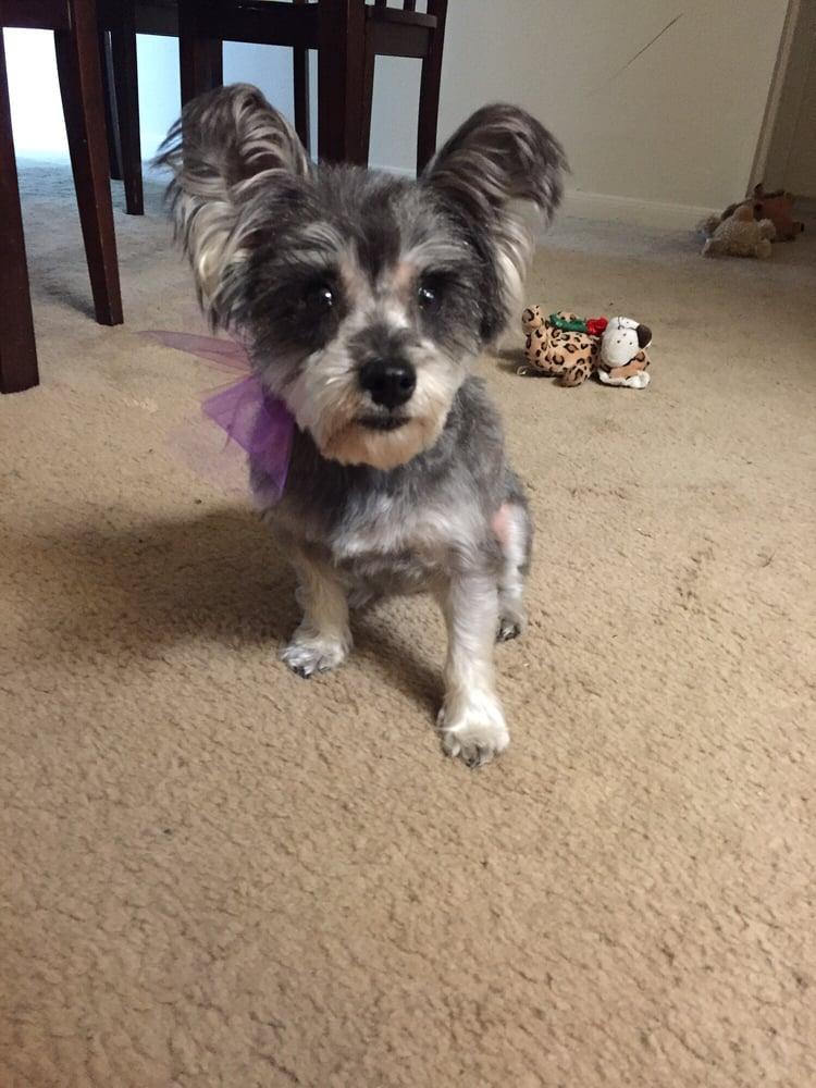 Dog Grooming San Antonio Tx
