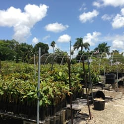 Photo Of Florida Colors Nursery Homestead Fl United States The Grounds