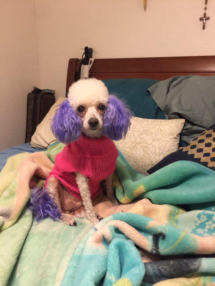 Dog Boarding Yelp San Diego