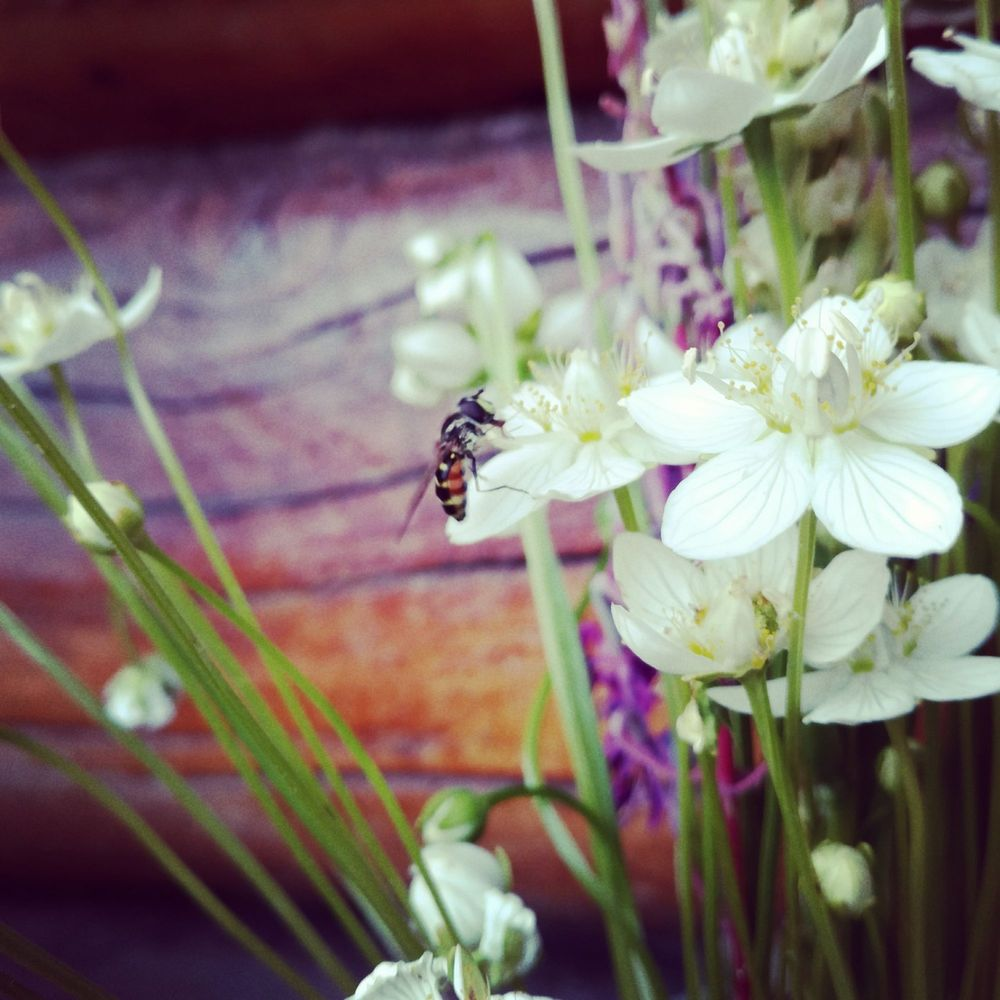 Some Beautiful Flowers Yelp