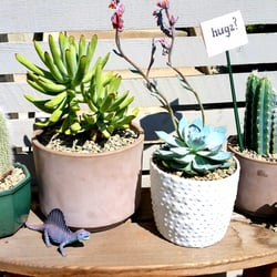 Photo Of Sunset Nursery Los Angeles Ca United States My Little Cactus