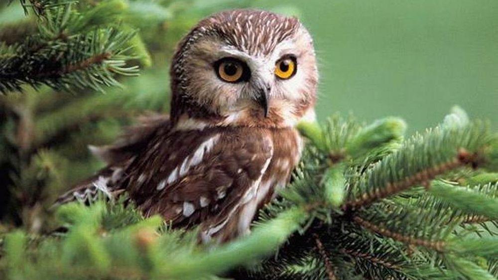 Happy Owl Bookshop: 358 River St, Manistee, MI