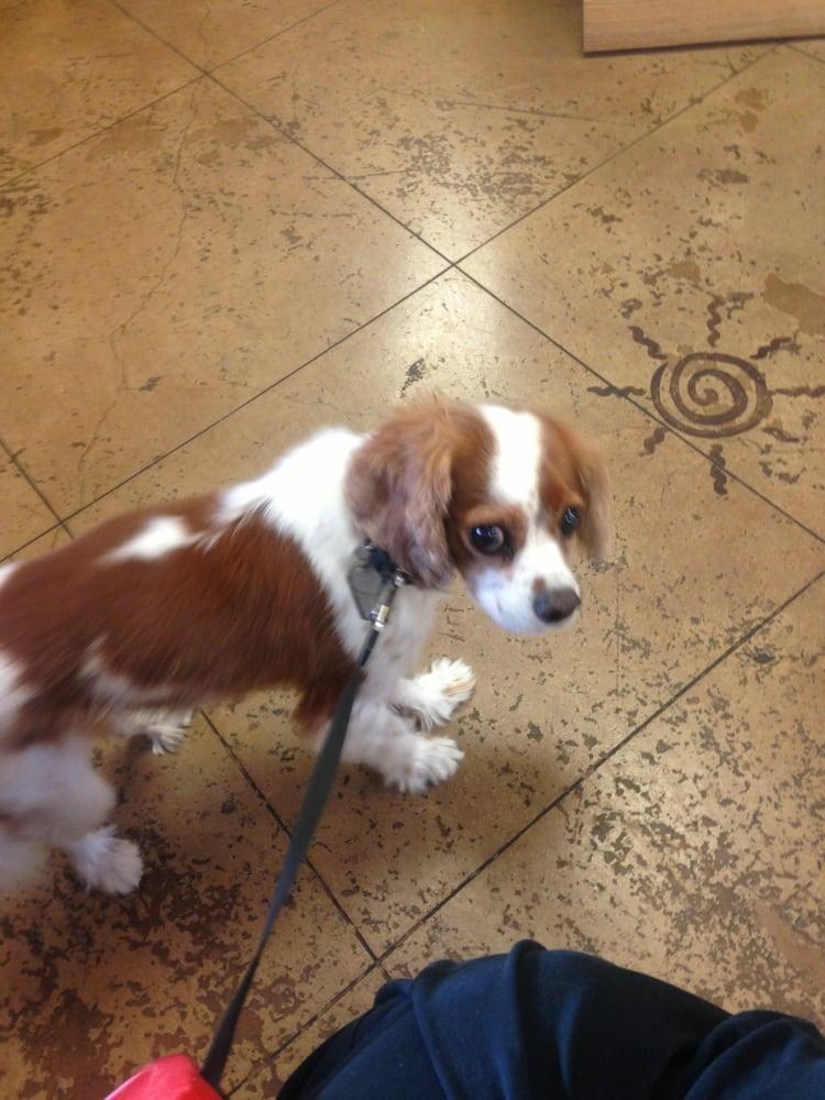 Coronado Pet Hospital: 4192 State Hwy 528 NE, Rio Rancho, NM