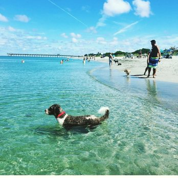 Image result for pictures of the Paw Park Brochard Beach
