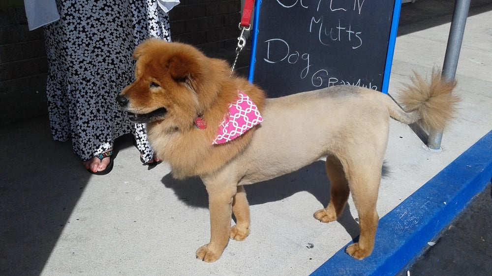 Styln Mutts Dog Grooming 53 Photos 29 Reviews Pet Groomers