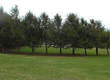 Northern Essex Tree Service: Essex, MA