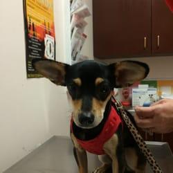221cedb3f Camelback Animal Clinic - 38 Photos & 41 Reviews - Veterinarians - 1025 E  Camelback Rd, Phoenix, AZ - Phone Number - Yelp