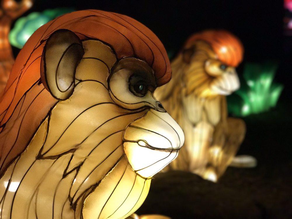 Chinese Lantern Festival: 1228 Hunter Mill Rd, Vienna, VA