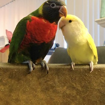 Canoga Discount Birds - 85 Photos & 101 Reviews - Pet Stores